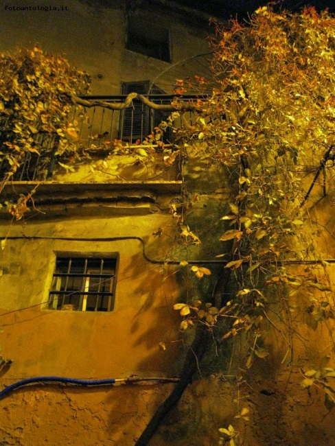 Roma by night - Trastevere