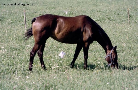Cavallo in val Seriana