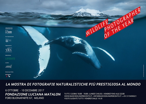 Wildlife Photographer of the Year 52
